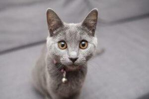 kedi şaşkın bakıyor