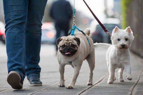 yolda yürüyen iki köpek