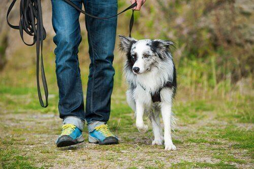 sürünün lideri olan adam ve köpeği