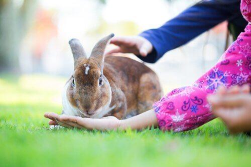 tavşan sahiplenmek
