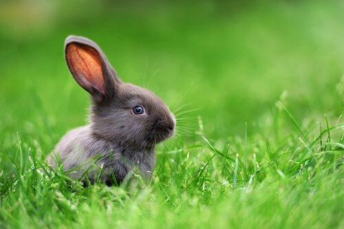bitkilerin arasında oturan cüce tavşanlar