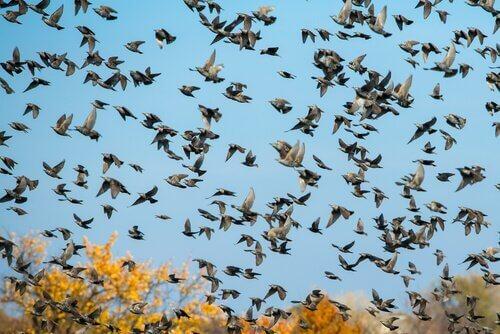 kuşların tarihi