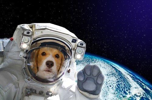 uzaydaki köpek Laika