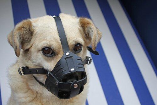 köpekleri evde tedavi etmek