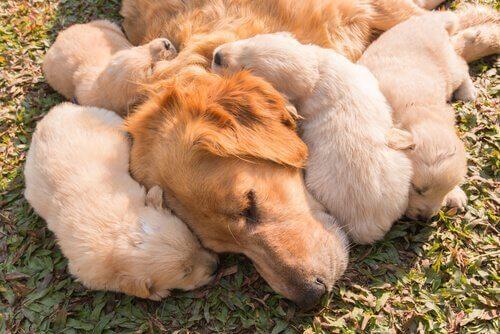 anne köpek ve yavruları