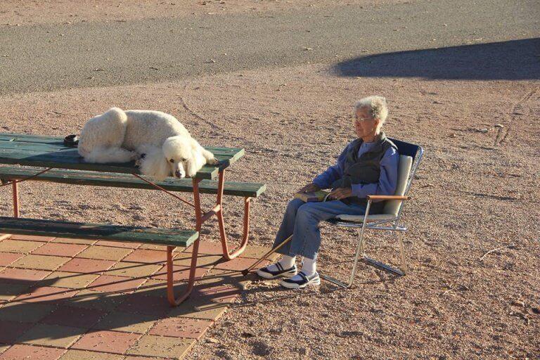 90 yaşındaki kadın ve köpeği