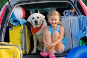 köpeğinizle yapabileceğiniz aktivitelerden biri seyahat