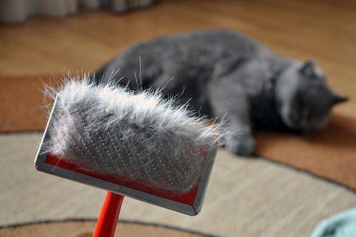 Kedilerin Tüy Dökmesi Tehlikeli Olabilir