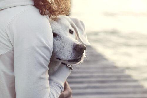 sahibinin kucağında duran mutlu beyaz köpek