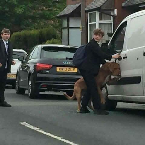 Bradley, tasmasından asılan köpeği kurtaran genç adam