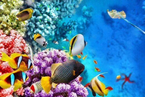 Büyük Set Resifi ve Orada Yaşayan Deniz Canlıları