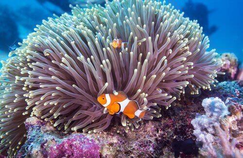 mercan kayalıklarında deniz canlıları