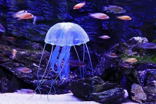 denizanası sokması