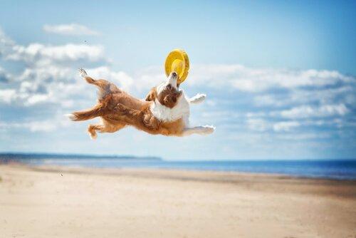 frizbi oynayan köpek