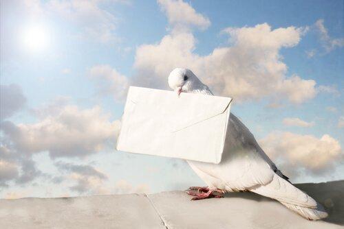 haberci güvercin
