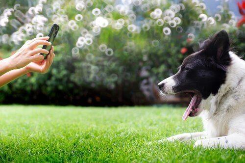 esneyen köpeğin fotoğrafını çekmek