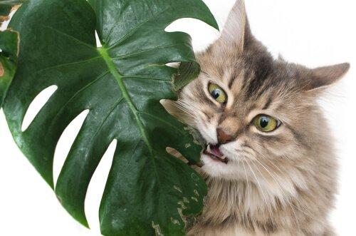Hayvanlar İçin En Zehirli Bitkiler