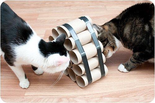 kediler için ev yapımı oyuncaklar