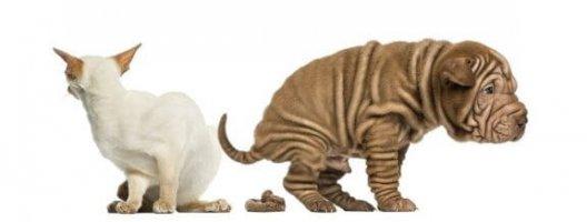 Evcil Hayvanlarda Kabızlık Nasıl Tedavi Edilir