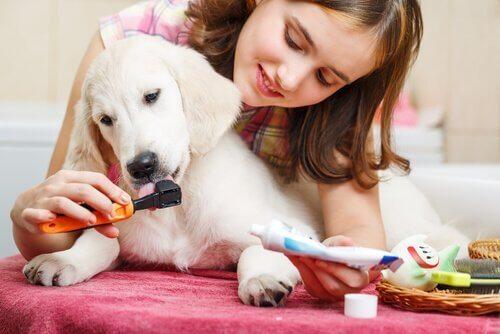 köpeğinin dişini fırçalayan genç