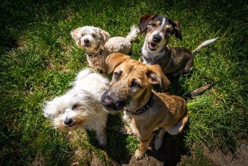 Yaygın Rastlanan Davranışlar: Köpeği İnsanlaştırmak