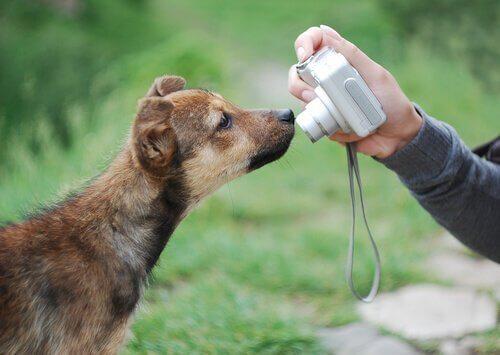 Köpeğinizin Güzel Fotoğraflarını Çekmek için İpuçları