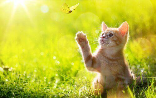kedi kelebek yeşillik