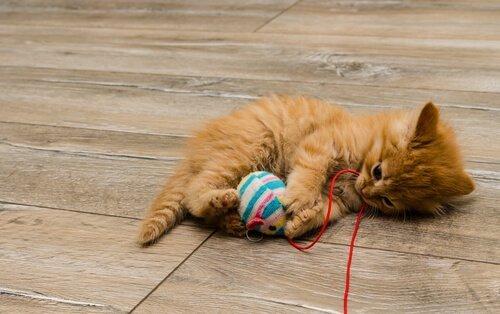 Kediler İçin Ev Yapımı Oyuncaklar