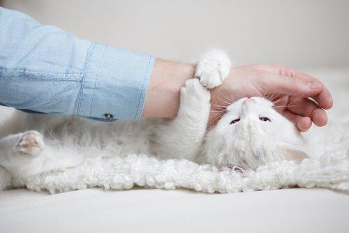 Kediler Dokununca Neden Isırır?