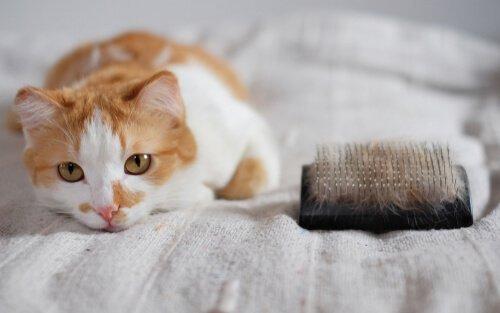 kedilerin tüy dökmesi