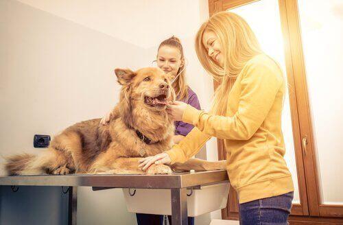 köpeği veterinere götürme