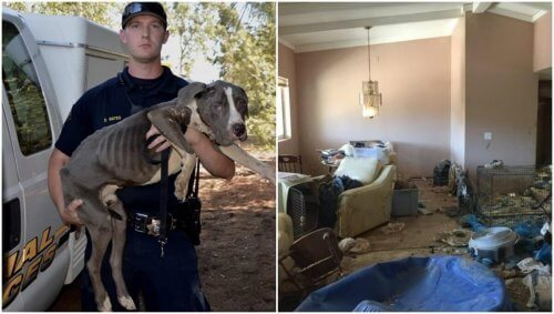 40 Pitbull'un Sonu: Terk Edilen Hayvanları Kurtarmak