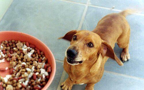 köpek beslemek mama kabı