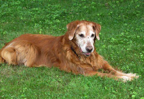 çimlere uzanan köpek