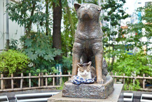 Hachiko'nun İzinden Giden 4 Köpek