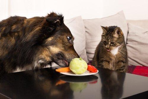 Köpeğiniz İçin Harika Meyveler Ve Sebzeler