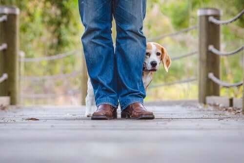 köpek korku sahibinin bacakları