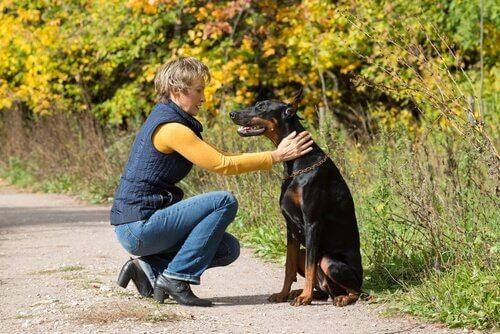 köpek ve sahibi yürüyüş yolu