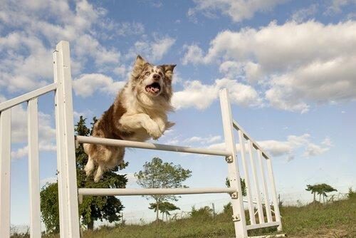 Köpek Sporları: Hangilerini Biliyorsunuz?