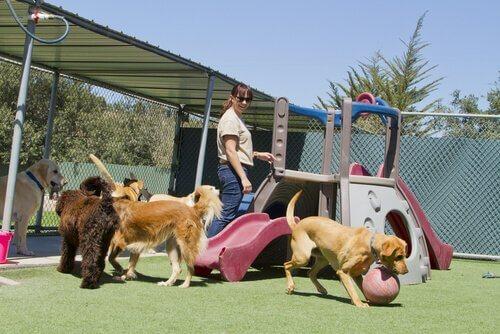 köpekler oyun alanı