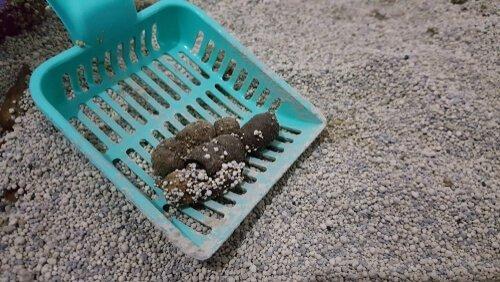 kum kabı temizliği