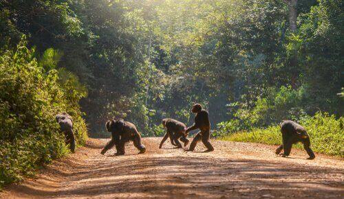 orman primat grubu kamera