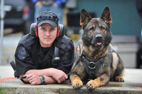 polis ve polis köpeği