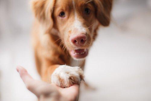 Ekonomik Açıdan Zorluk Çekerken Köpek Beslemek