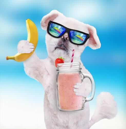 köpeklere smoothie
