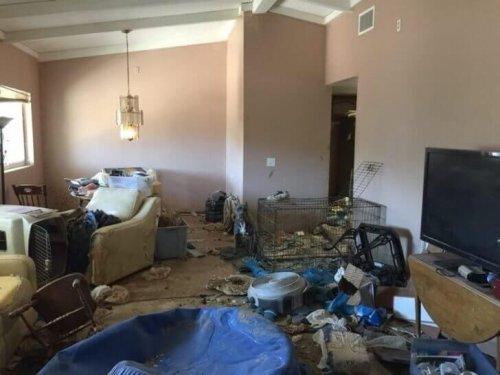 terk edilen köpeklerin yaşadığı ev