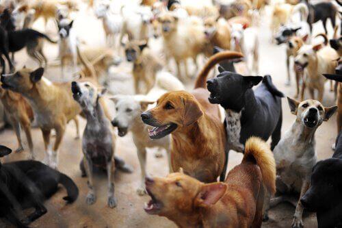 Tekis: Terk Edilmiş Köpekleri Kurtaran Adam
