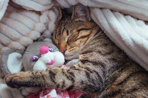 Kediler Rüya Görürler Mi: Kedilerde Uykunun Evreleri