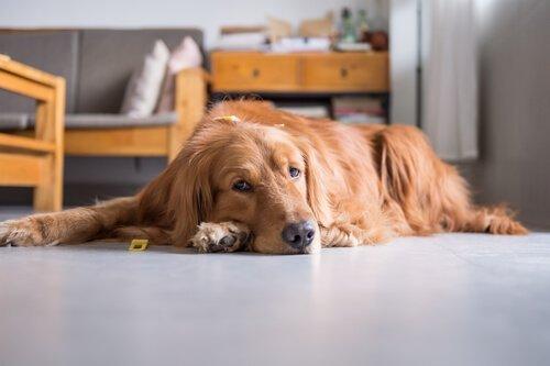 Evcil Hayvanınızın Hareketsiz Yaşam Tarzı