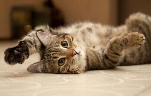yerde uzanan kedi